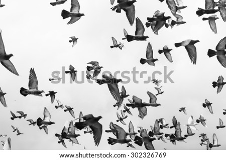 Photo of Black and white Masses Pigeons birds flying in the sky