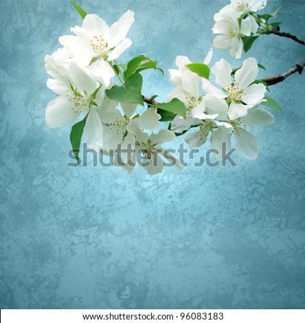 photo of blossoming tree brunch with white flowers on grange dark blue background