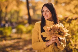 Photo of charming attractive girl model posing for autumn fall park photo session look copyspace hold collect maple leaves wear jumper