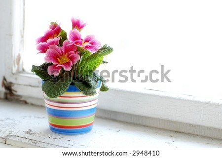 Photo of colorful flower in flowerpot at window.