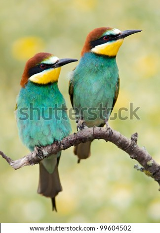 Photo of couple of birds a over spring background
