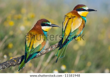 Photo of couple of birds - focus in te frist plane -