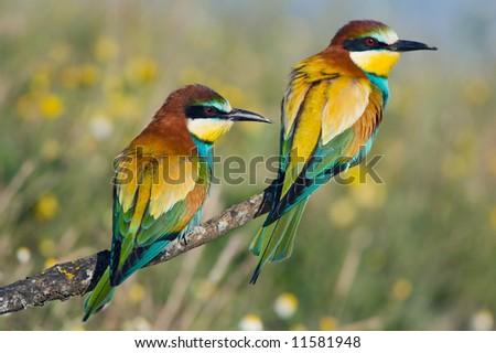 Photo of couple of birds - focus in te frist plane -