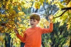 Photo of cute little boy enjoying autumnal nature, pretty infant playing in park, cheerful baby boy having fun outdoors, adorable kid in fall forest, happy child play with dry orange maple leaves.