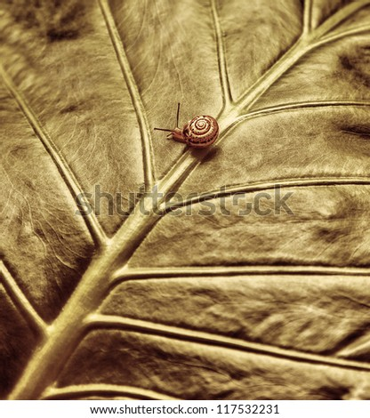 Photo of cute little snail crawling on fresh leaf, small slimy mollusk crawl in the garden, slow motion, grunge image, fauna and flora, wild nature, escargot with spiral shell, environment detail