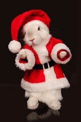 Photo of cute rabbit in a santa costume. Isolated on dark background