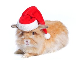 Photo of cute rabbit in a santa hat. Isolated