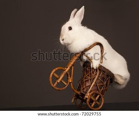 Photo of cute rabbit riding bike. Isolated on dark background