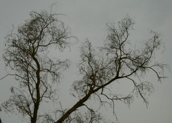 Photo of dead branches of old tree