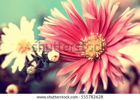 photo of delicate red aster #155782628