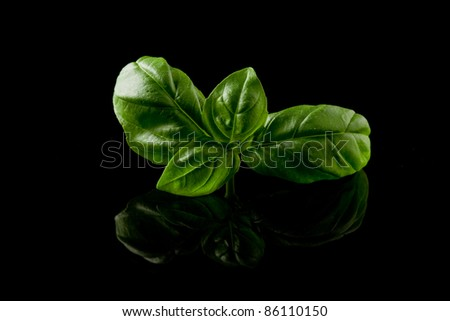 photo of delicious fresh basil leaves on a black background