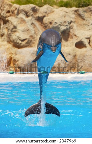 Photo of dolphins doing a show in the swimming pool