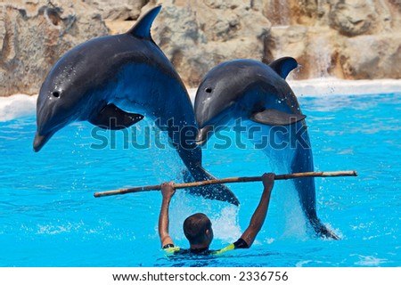 photo of dolphins doing a show in the swimmingpool