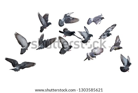 photo of doves isolated on white background #1303585621