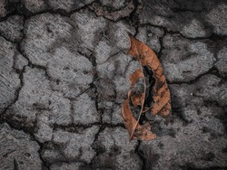 Photo of dry and hollow leaf on the cracked concrete surface.