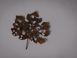 Photo of dry and perforated leaf in dark setting.