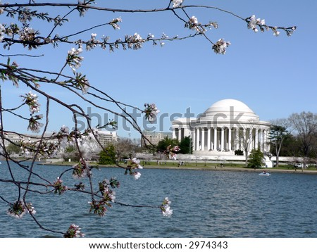 photo of early blooming Cherry Blossoms in Washington, DC during the beginning of Spring with Jefferson Memorial in the background