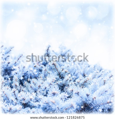 Photo of fir branch covered white snow on blue sky background, rime on pine tree border, winter floral backdrop, New Year greeting card, copy space, snowy forest, wintertime holidays, greeting card
