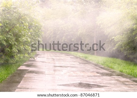 Photo of foggy path outdoors with plants along the road