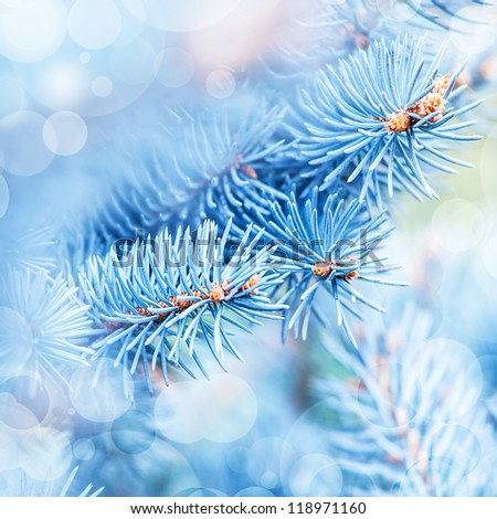 Photo Of Frozen Fir Tree Background, Branches Of Evergreen Tree