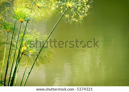 Photo of green water foliage with side copyspace - stock photo