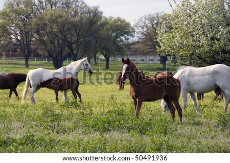 Photo of  horses in a farm with trees in background