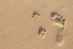 Photo of human footprint beside dog footprint on the tropical beach