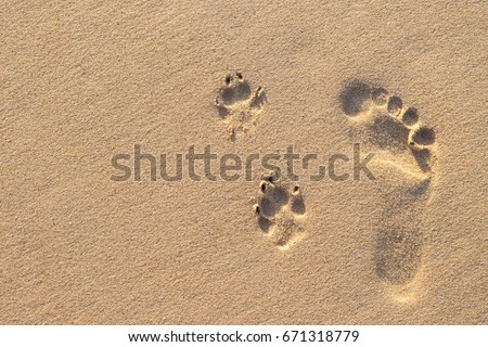 Photo of human footprint beside dog footprint on the tropical beach
