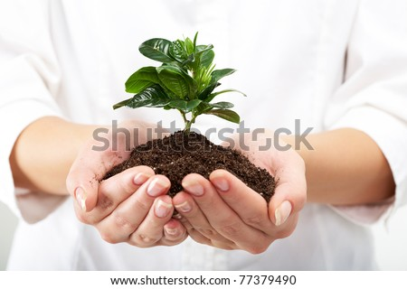 Photo of human hands holding little sprout with care