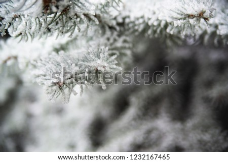 photo of ice covered trees #1232167465