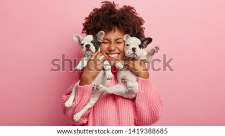 Photo of joyful dark skinned lady with Afro haircut, feels fun, carries two little french bulldog puppies, expresses affection, have good relationship, owner feels responsibility. Pedigree pets #1419388685