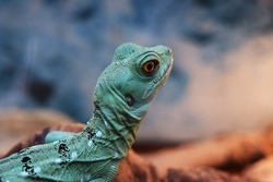 Photo of lizard close up in zoo