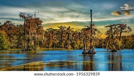 Photo of louisiana swamp and bayou Stok fotoğraf ©