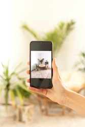 Photo of mobile phone taking photo of green houseplants and comfortable boho chair.