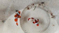 Photo of nemo fish on the aquarium