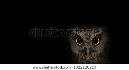 Photo of  Photo of owl in high quality, face of a beautiful owl. owl isolated on black background. Owl macabre, image for halloween