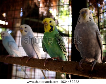 Photo of parakeets perched on a tree branch inside a big bird cage