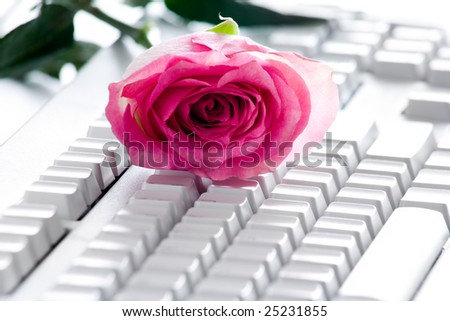 Photo of pink rose bud lying on white computer board