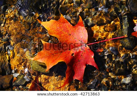 Photo of red leaf floating in the water in Virginia at the Shenandoah National Park.
