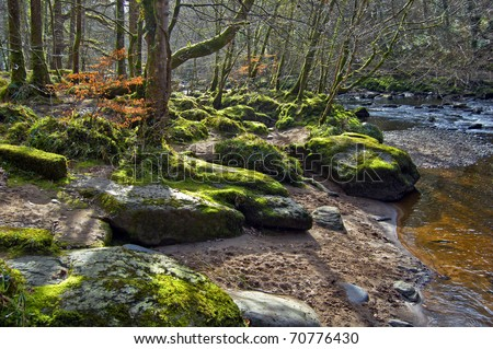 Photo of River Roe bank and surrounding forest:  Limavady, Ireland.