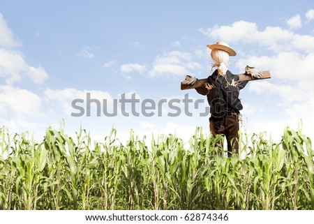 photo of scarecrow in corn field on a sunny day