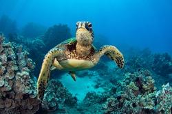 photo of Sea turtle in the Galapagos island
