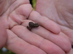 Photo of small green frog sitting on a hand. Young frog on a palm. Little green frog in hands, with river bank in background. Fauna photo. Amphibian photo. Animal care concept. Environment protection