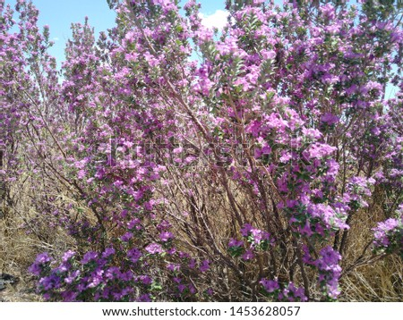 Photo of some beautiful flowers found on a public park in Chihuahua, Chihuahua #1453628057