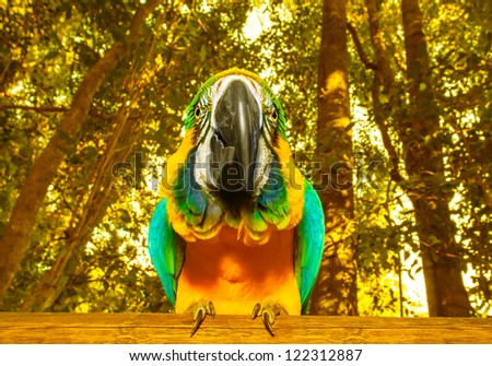 Photo of South Africa beautiful bird, big colorful macaw parrot in the forest, funny yellow parakeet with blue wings in the zoo, african tropical nature, wild animal, ara portrait, wildlife concept