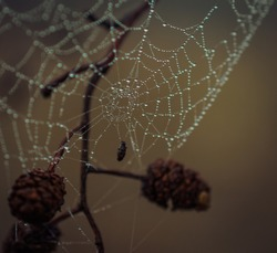 Photo of  spiderweb in morning dew