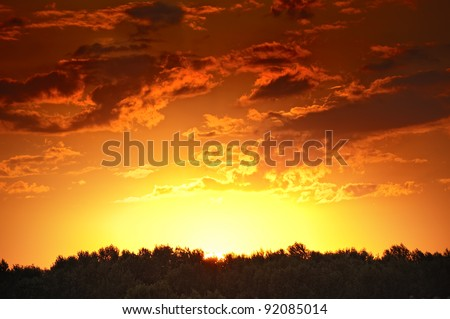 photo of sunset in forest - stock photo