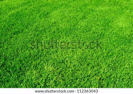 Photo of the beautiful green grass texture