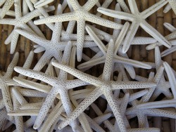 Photo of the dead starfishes.