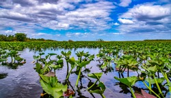 Photo of the everglades in florida
